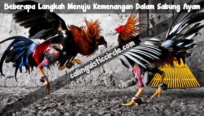 Beberapa Langkah Menuju Kemenangan Dalam Sabung Ayam